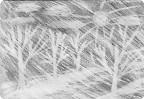 рисование ластиком на тонированой простым карандашом основе