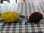 божья коровка и черепаха