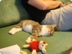 о финиках и котах