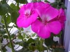 Цветы в подарок  Татьянам а также всем  женщинам в этот праздничный день