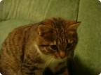 О финиках и котах 2