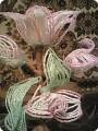 Бисероплетение: Белая лилия Бисер.