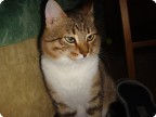 О Финиках и котах 3