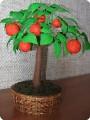 Мандариновое дерево- 2