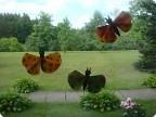 Опять бабочки