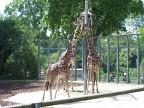 Зоопарк Вильгельма. Германия