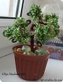 Моделирование: Денежное дерево из бисера Бисер.