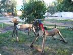 Вот такие кони поселились на детской площадке