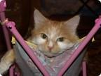 Кошка Злата.
