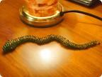 вышивка бисером видео уроки. змея из бисера.