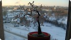 Поделка изделие Валентинов день Бисероплетение сакура-сердце дерево из бисера Бисер фото 1.