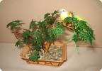 Поделка изделие 8 марта День рождения Плетение Мои деревья из бисера Бисер фото 1.