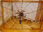 Надеюсь, что и пауки (к счастью, игрушечные) оценили мою паучью работу.  1.Эту сеть сплел не паук..... а я...