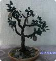 бисероплетение денежное дерево схемы - Самоделки из бисера.