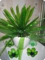 Комнатные растения из пластиковых бутылок своими руками