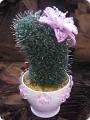 Мастер-класс 8 марта Бисероплетение Цветущий кактус МК Бисер фото 1.