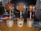 Первые кофейные деревца Страна Мастеров