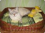 Как сделать коту спальное место своими руками