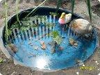 Как сделать своими руками водоем в детском саду