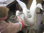 Кашпо лебеди из гипса своими руками