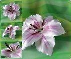Цветы кувшинки из атласных лент 168