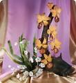 Орхидеи на корне