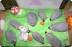 Объемная композиция «Мышиная семья»