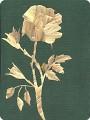 Роза для мамы