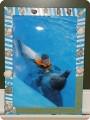 Воспоминание о дельфинарии