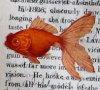 NatFish