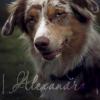 l Аlexandra l