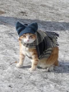Кошка_в_вязаной_шапке