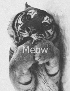 tigraoka