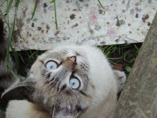 _Kristall_kosmos_cats