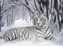 Наталья Тигровая