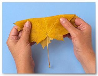 Дом будущего поделка: доктор айболит поделки из бумаги, Дом из картона поделка - Фото.
