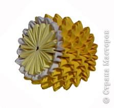 Лимон фото 1