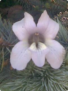 очень красиво цветёт дерево, но как называется не знаю. фото 2