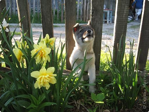Прежние домашние любимцы в течение зимы 2008 года перешли в «мир иной». Так случилось..., прошлой весной в нашем доме практически одновременно появились щенок и котенок.  фото 6