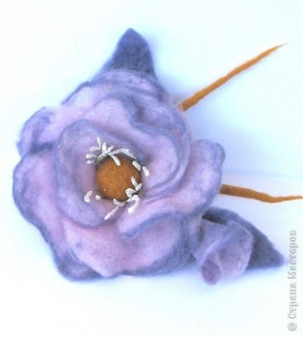 сиреневая роза фото 1