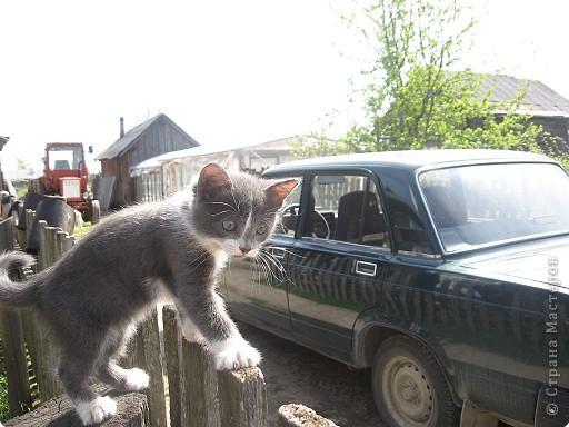 Прежние домашние любимцы в течение зимы 2008 года перешли в «мир иной». Так случилось..., прошлой весной в нашем доме практически одновременно появились щенок и котенок.  фото 4