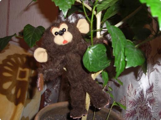 обезьянка Чичи фото 1