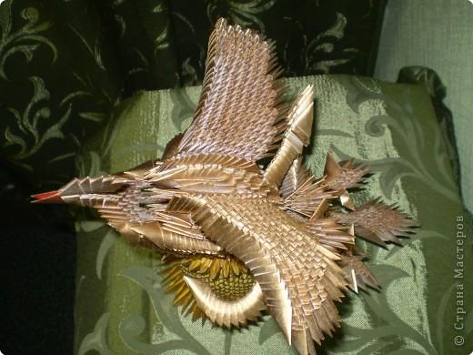 Птица-феникс фото 2