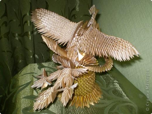 Птица-феникс фото 5