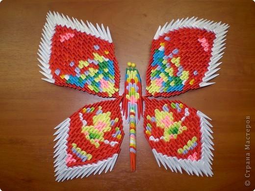Эти свободные бабочки фото 2