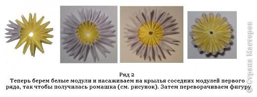 Лимон фото 6