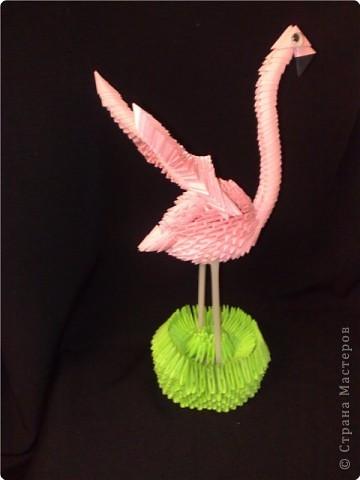 мой фламинго фото 2