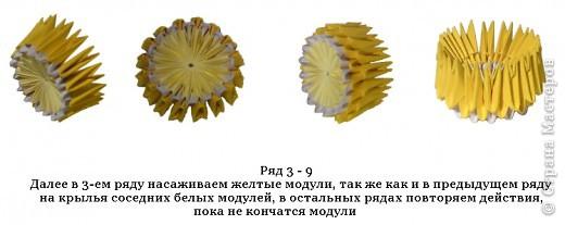 Лимон фото 7