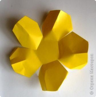 Сладкие цветы фото 7