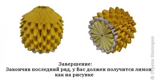 Лимон фото 8